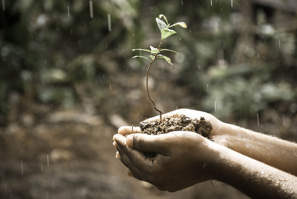 hands holding plant in rain